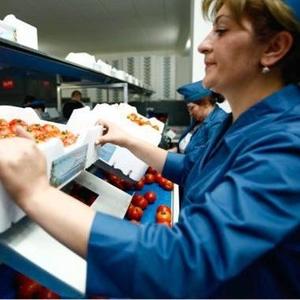 Требуются разнорабочие,  рабочие без опыта работы  на сезонную работу.