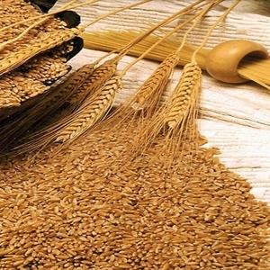 закупаем пшеницу в любых объемах